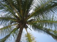 Playa01